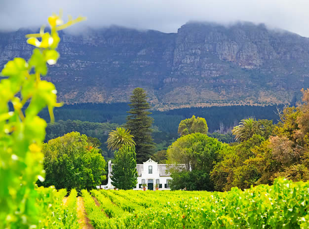 Constantia Valley Private Tour